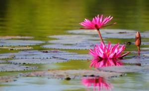 Sri Chinmoy jóga - Bárki gyakorolhatja a jógát